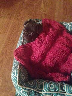 Ravelry: Dog blanket pattern by Carmen Caamano