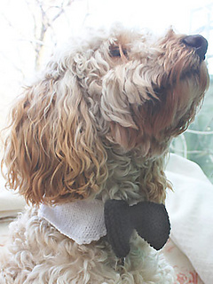 Ravelry: Dog Bow Tie pattern by All About You